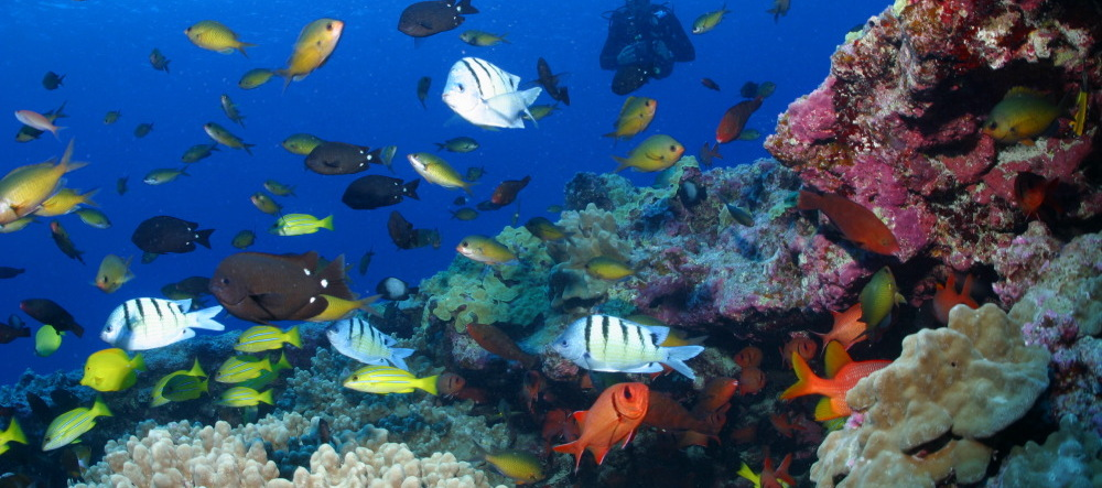 News ocean tipping points for How many fish are in the ocean